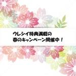 春のキャンペーン開催中!