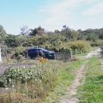 家庭農園パート5